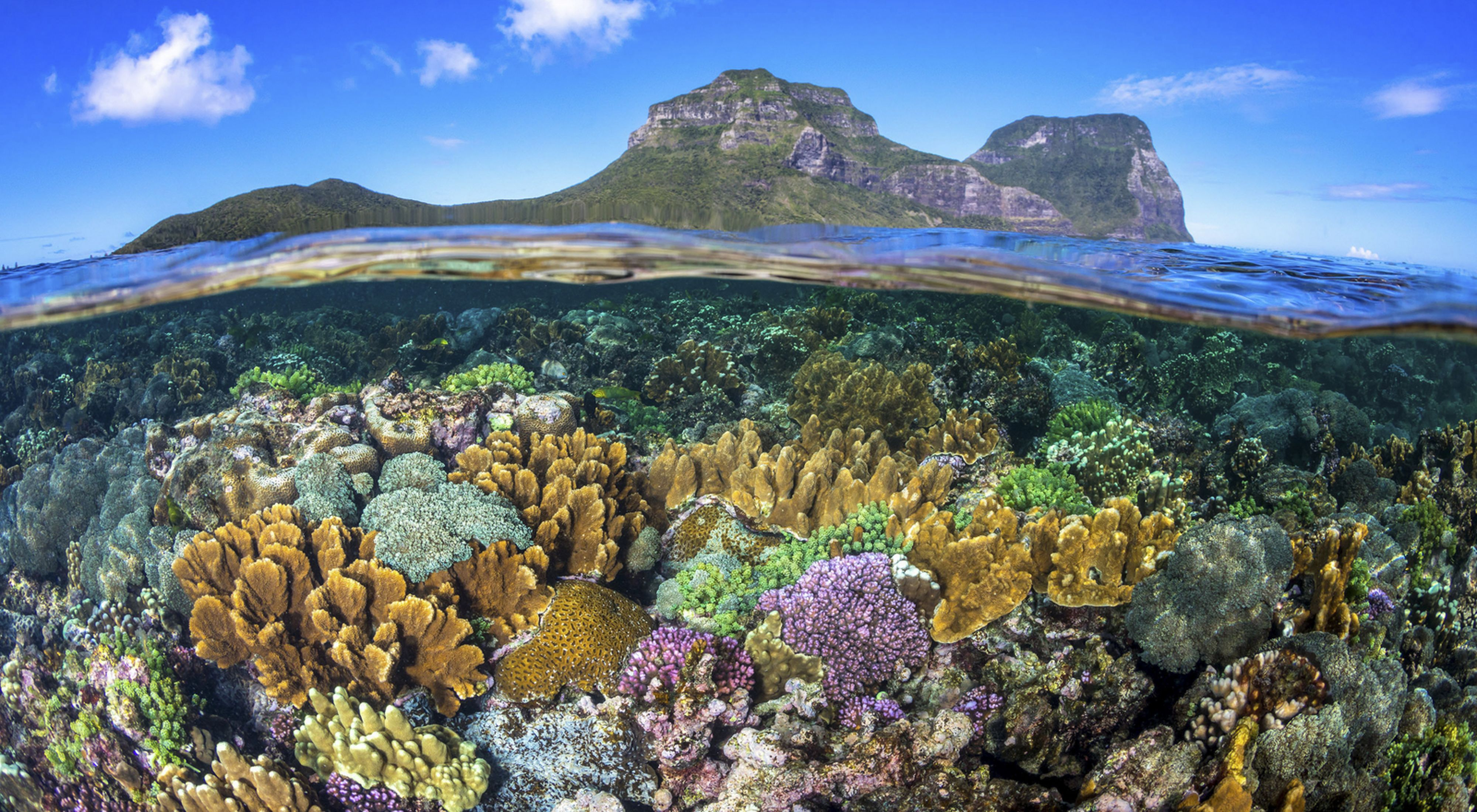 Coral reefs provide important benefits to near-shore systems.