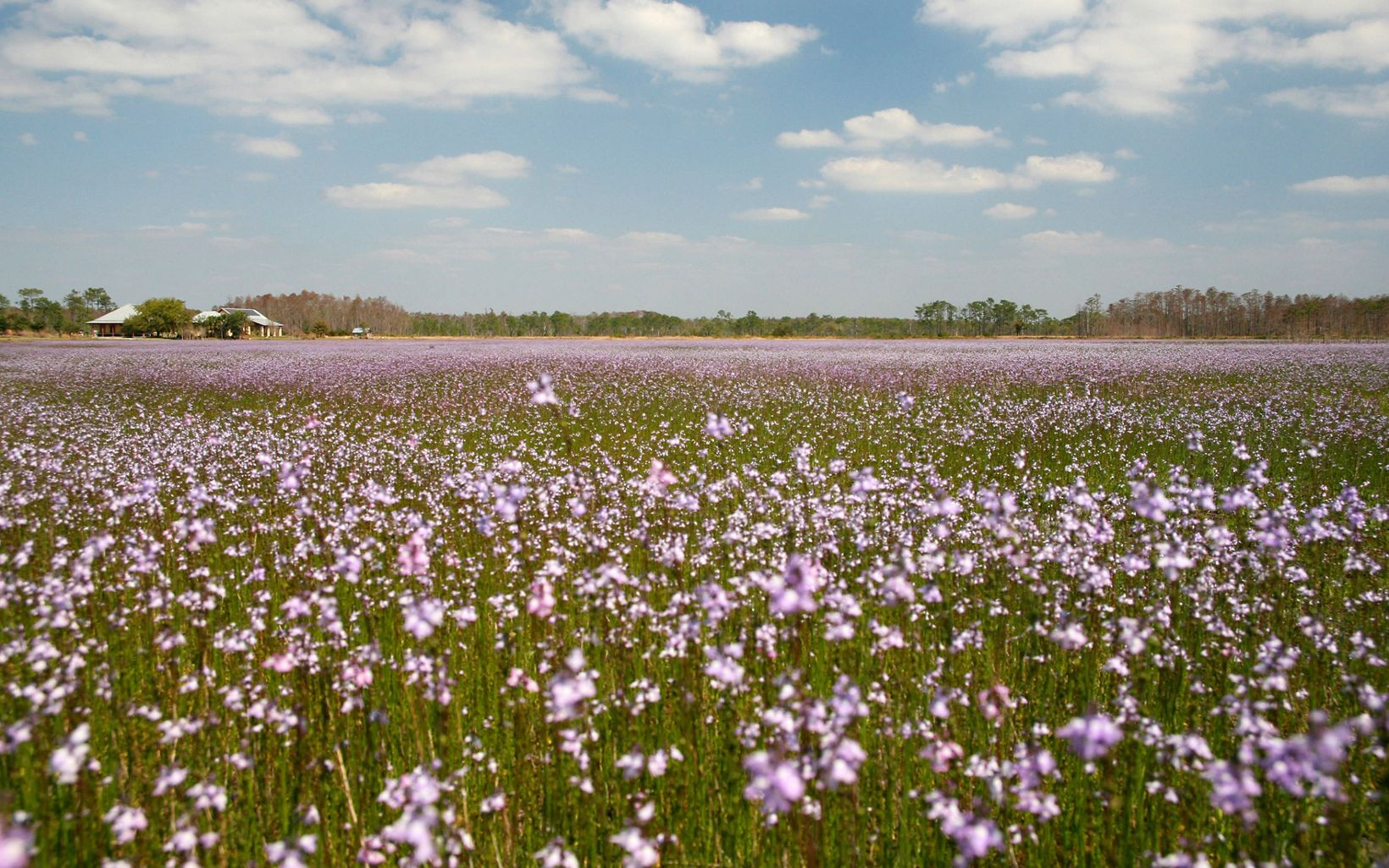 Field of blooming flowers