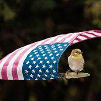 American Flag with a Goldfinch Bird