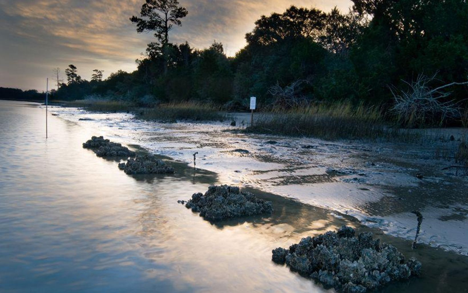 The Conservancy is studying the use of oyster castles as building blocks for reefs in the Cape Romain National Wildlife Refuge, South Carolina