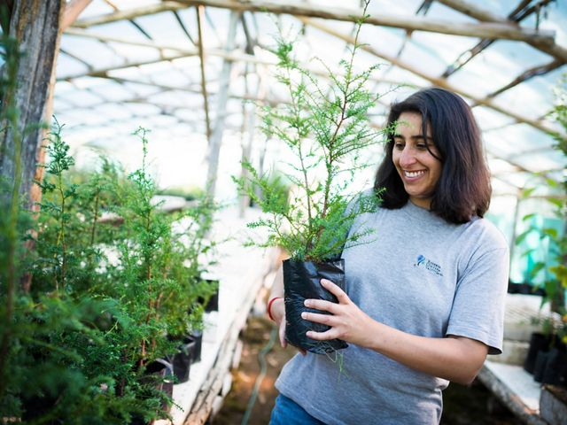 Patricia Poveda, a park guard at the Valdivian Coastal Reserve, holding an Alerce (Fitzroya cupressoides) sapling in the reserve's greenhouse.