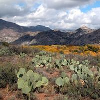 Fall colors at Gila Preserve in New Mexico. The Gila Riparian Preserve protects more than 1000 acres of the Southwest's fragile riparian habitat and the verdant gallery woodland along the Gila River, the last of the Southwest's major free-flowing rivers.