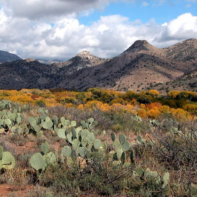 Many cacti in the foreground, mountain range and blue cloudy sky in background.