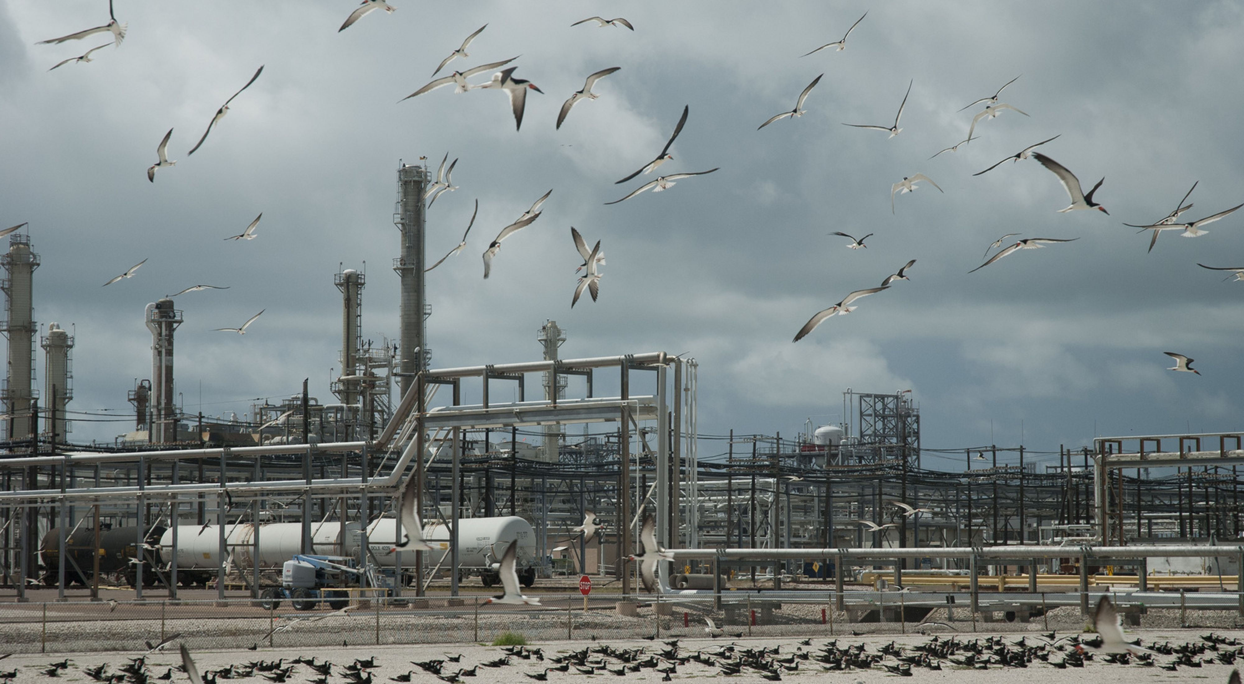 Birds fly around metal pipes and machinery.