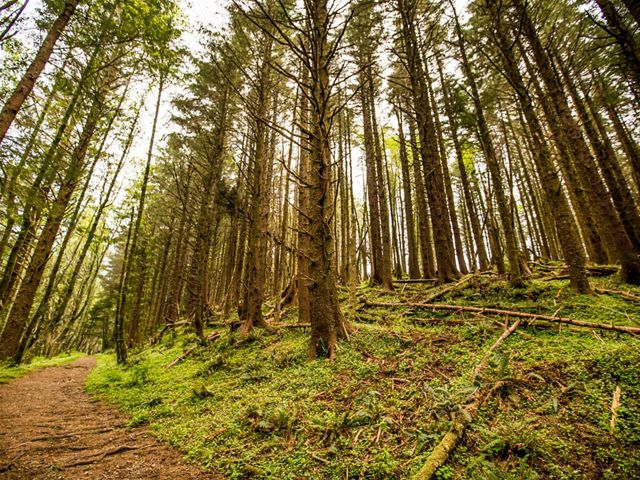 Forest located on the Conservancy's Cascade Head Preserve in North Lincoln City, Oregon.