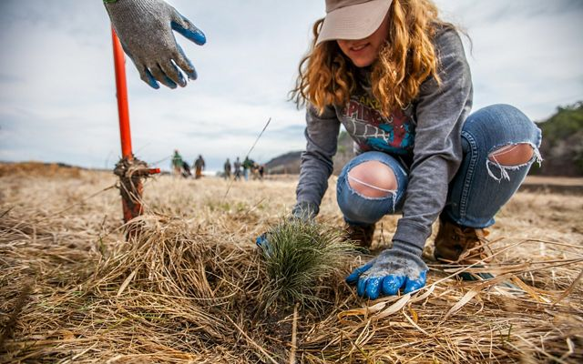Photo of a woman in jeans planting a young seedling tree.