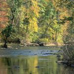 A wide, shallow creek curves between two heavily forested banks. The trees show autumn colors of red and gold. The water ripples over small rocks in the center of the creek.