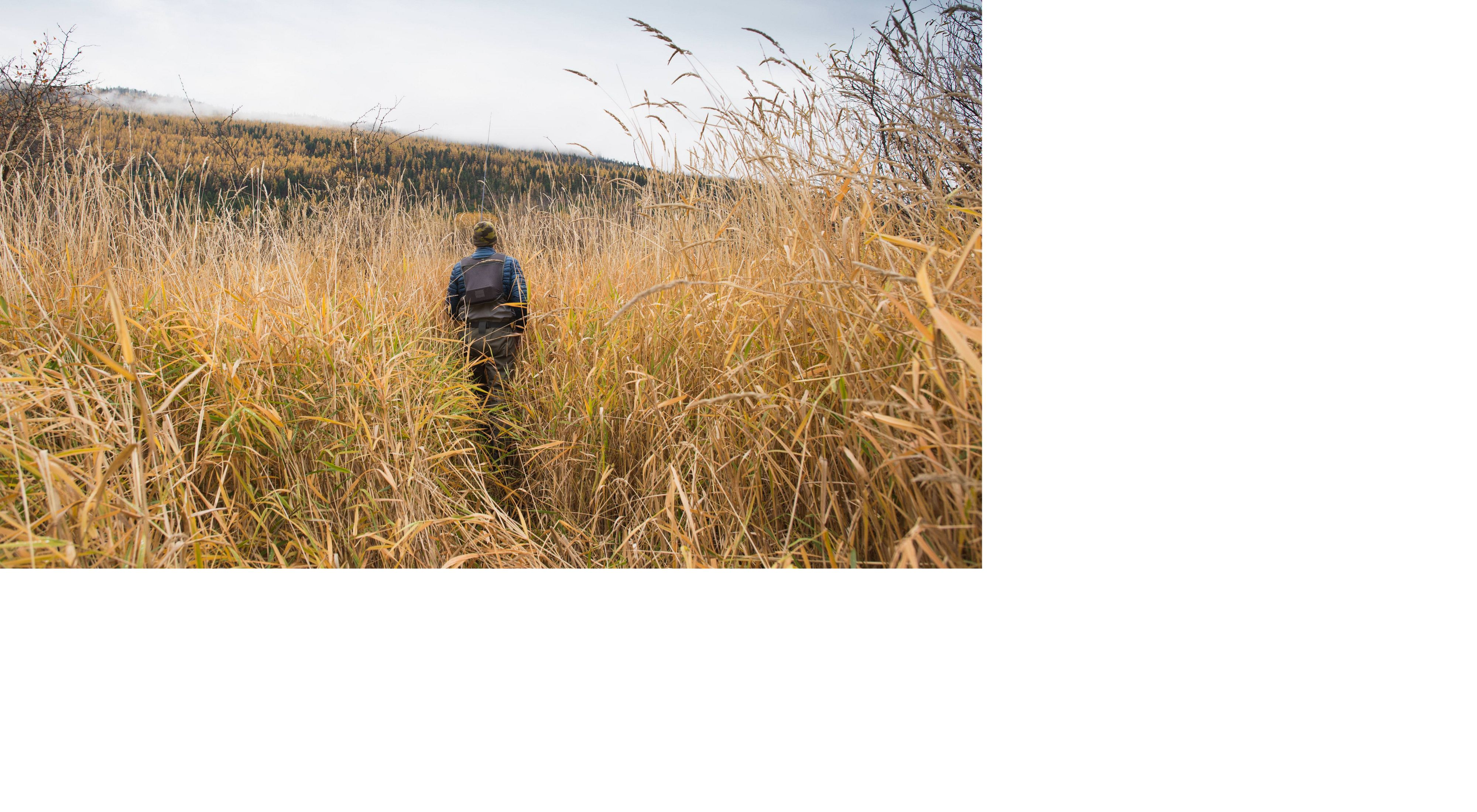 back view of someone walking through high yellow reeds