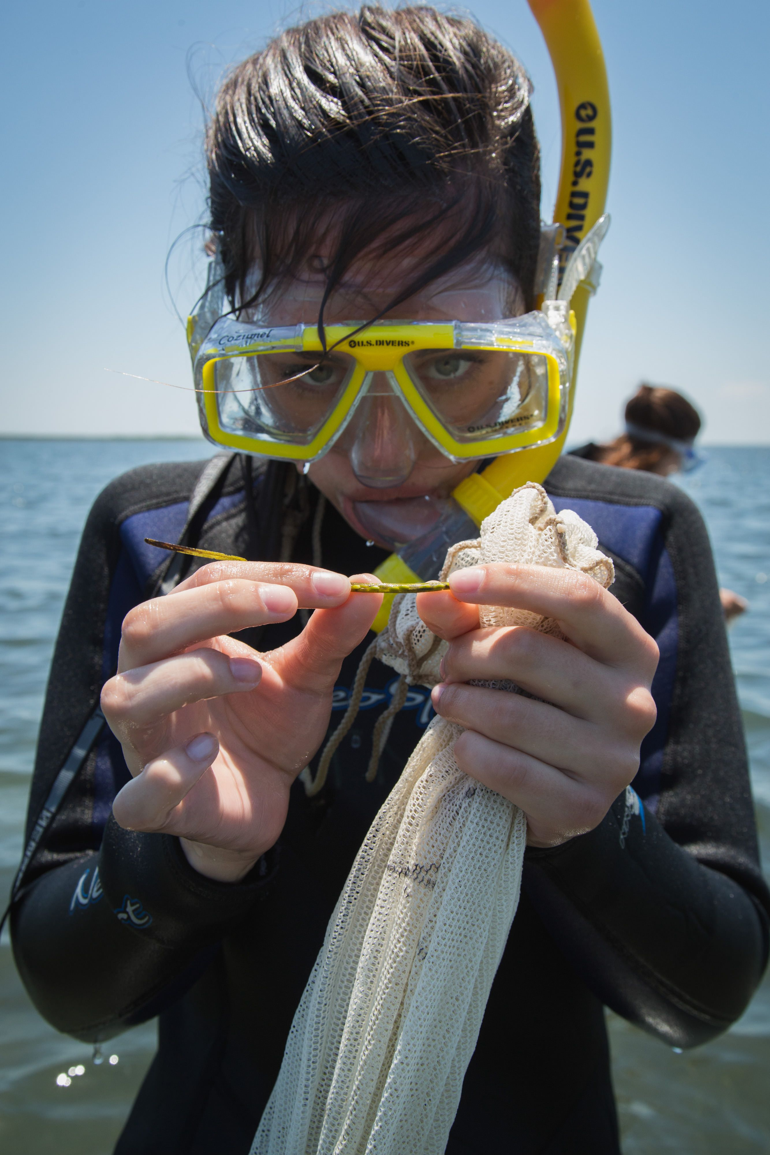 A woman wearing a yellow snorkeling mask looks closely at an eelgrass shoot that she holds stretched between her fingers.