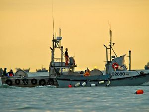 Commercial fishing boats in Alaska's Bristol Bay
