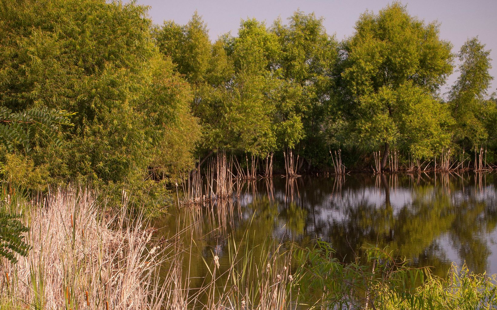 Wetlands in  Kentucky's Big River Corridor Project