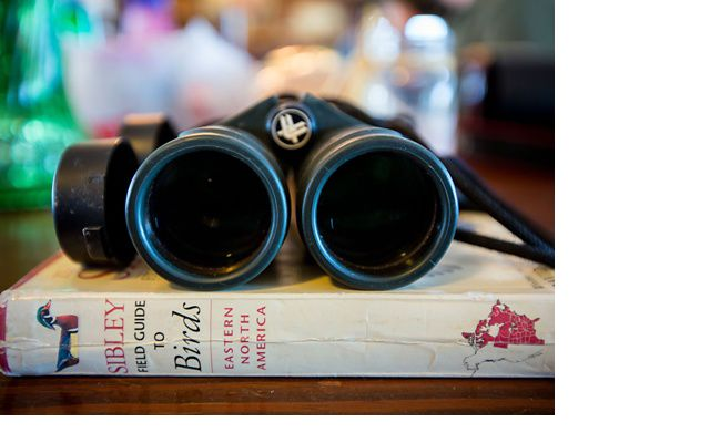 Binoculars and a Sibley Field Guide to Birds
