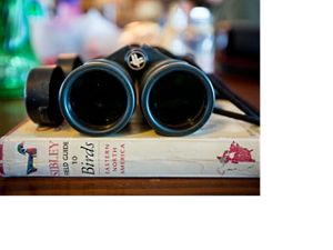 binoculars and birding book