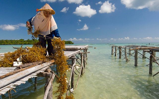 a person in a straw hat collects seaweed on a dock over tropical waters