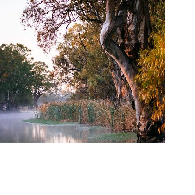 line the bank of Frenchmans Creek at dawn in the Carrs, Capitts and Bunberoo (CCB) Creeks system.
