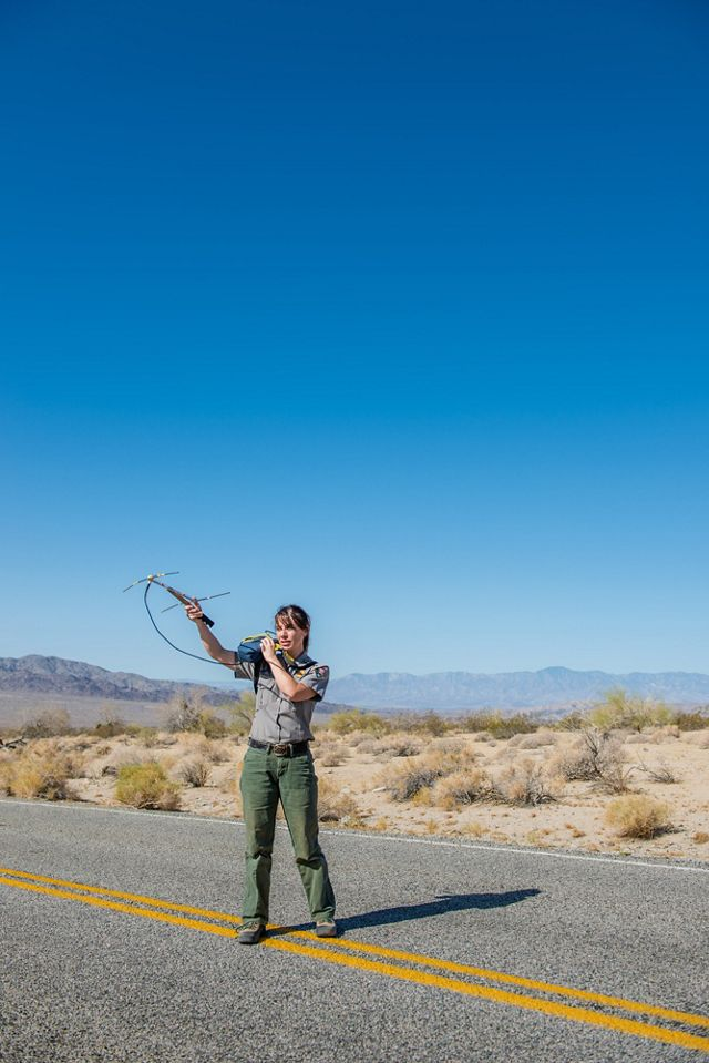 Kristen Lalumiere tracks the location of recently tagged desert tortoises in Joshua Tree National Park.
