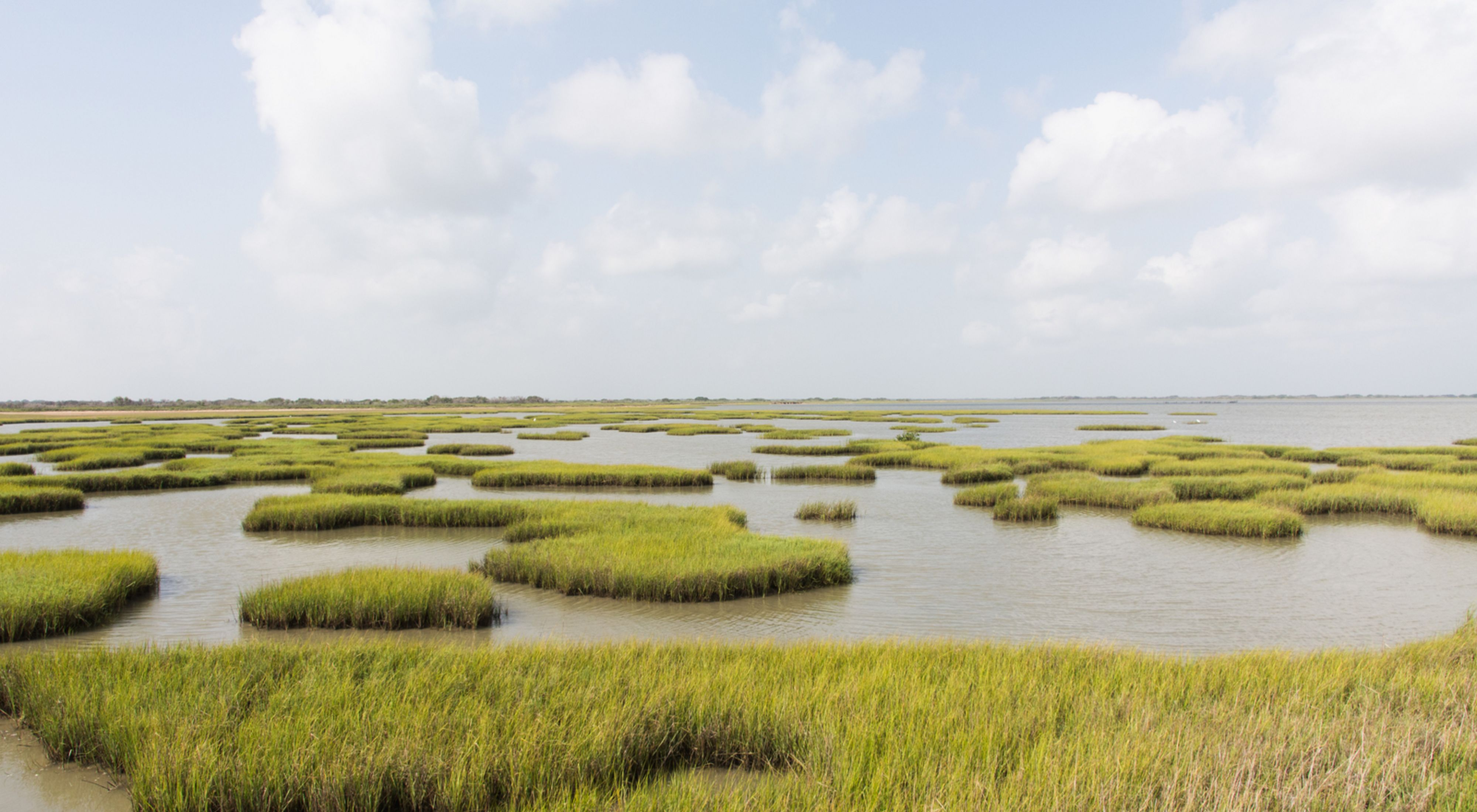 A broad expanse of salt marsh with patches of open water and patches of marsh grass.
