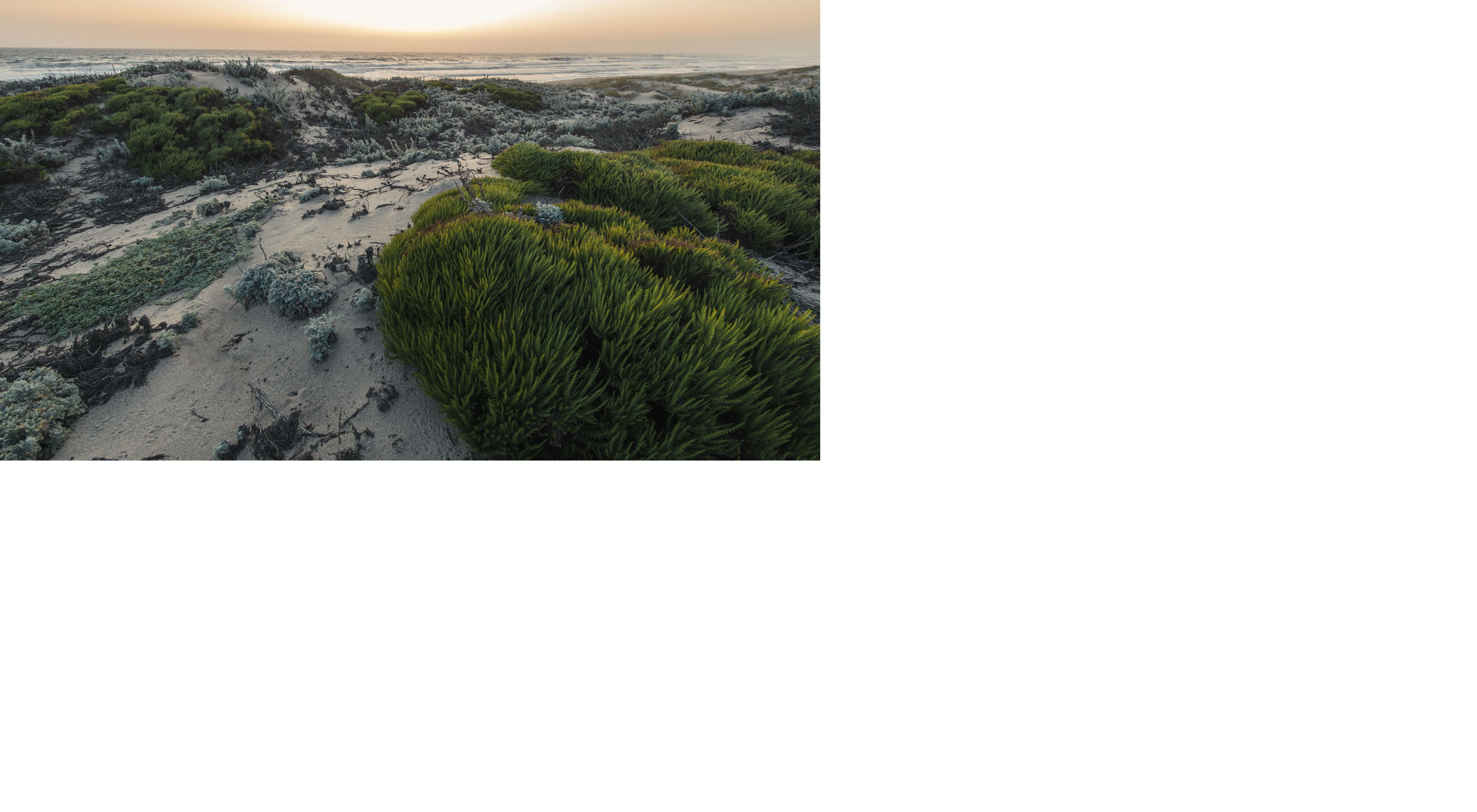 Coastal dunes, one of the threatened California ecosystems, found at Moss Landing, California, north of Monterey.