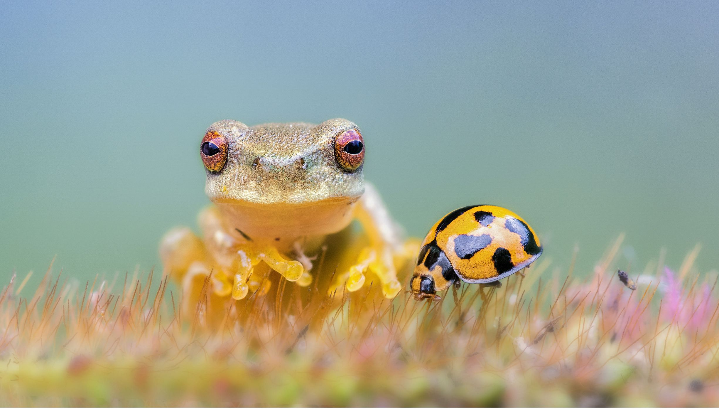 una bella rana observa el sol