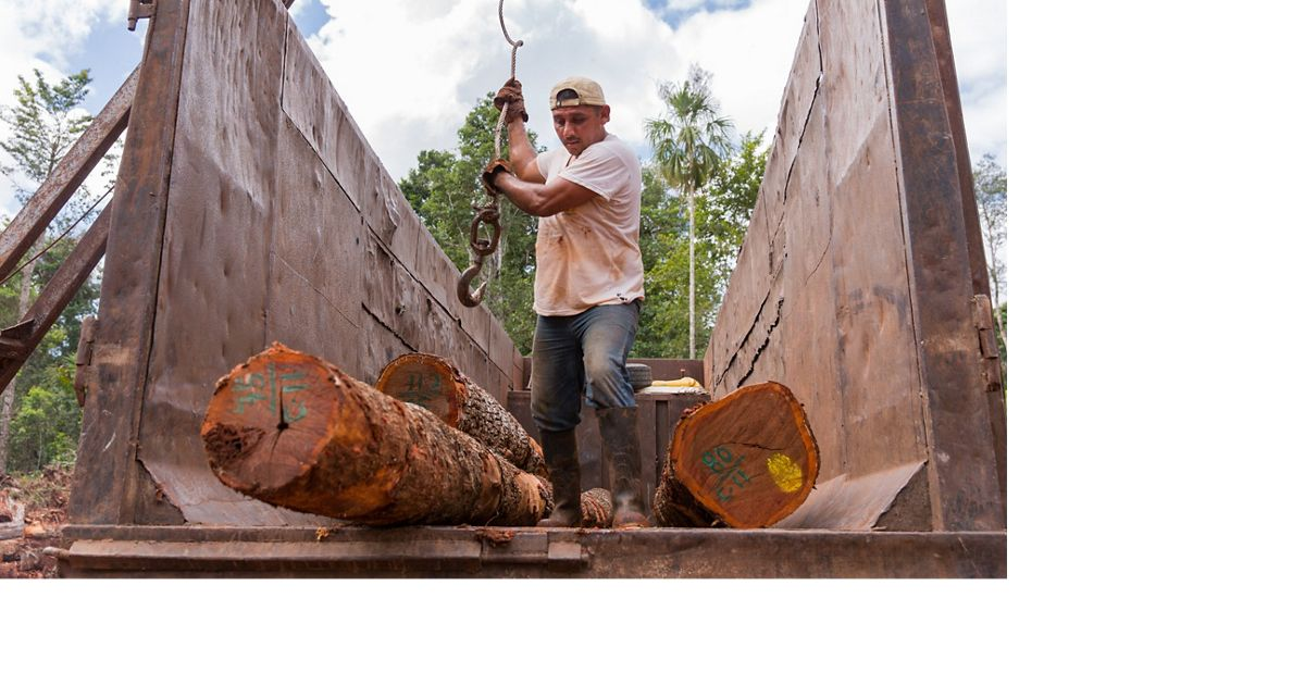 Leonardo Reyes Peregrino loads Chico Zapote logs onto a truck with a crane in a clearing in the tropical rainforest around Noh Bec, Quintana Roo.