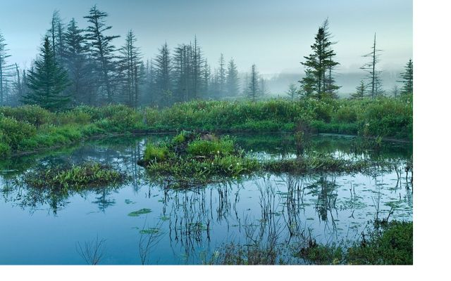 a pond surrounded by trees on a misty blue morning