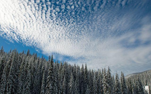 Bosque Siempreverde cubierto de nieve y el cielo