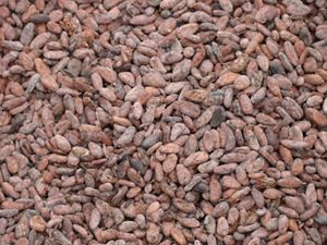 São Félix do Xingu's cocoa beans from a small cacao plantation in which the cacao trees are intermixed with mahogany and other timber species.