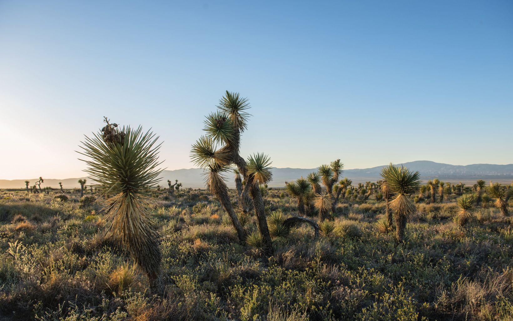 Arthur B. Ripley solar mitigation property in Lancaster, California.