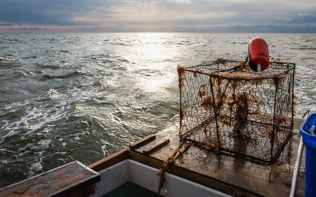 A crab pot covered in seaweed sits on the bow of a boat. An orange float sits on top of it. The sun reflects on the gently rolling Atlantic Ocean in the background.