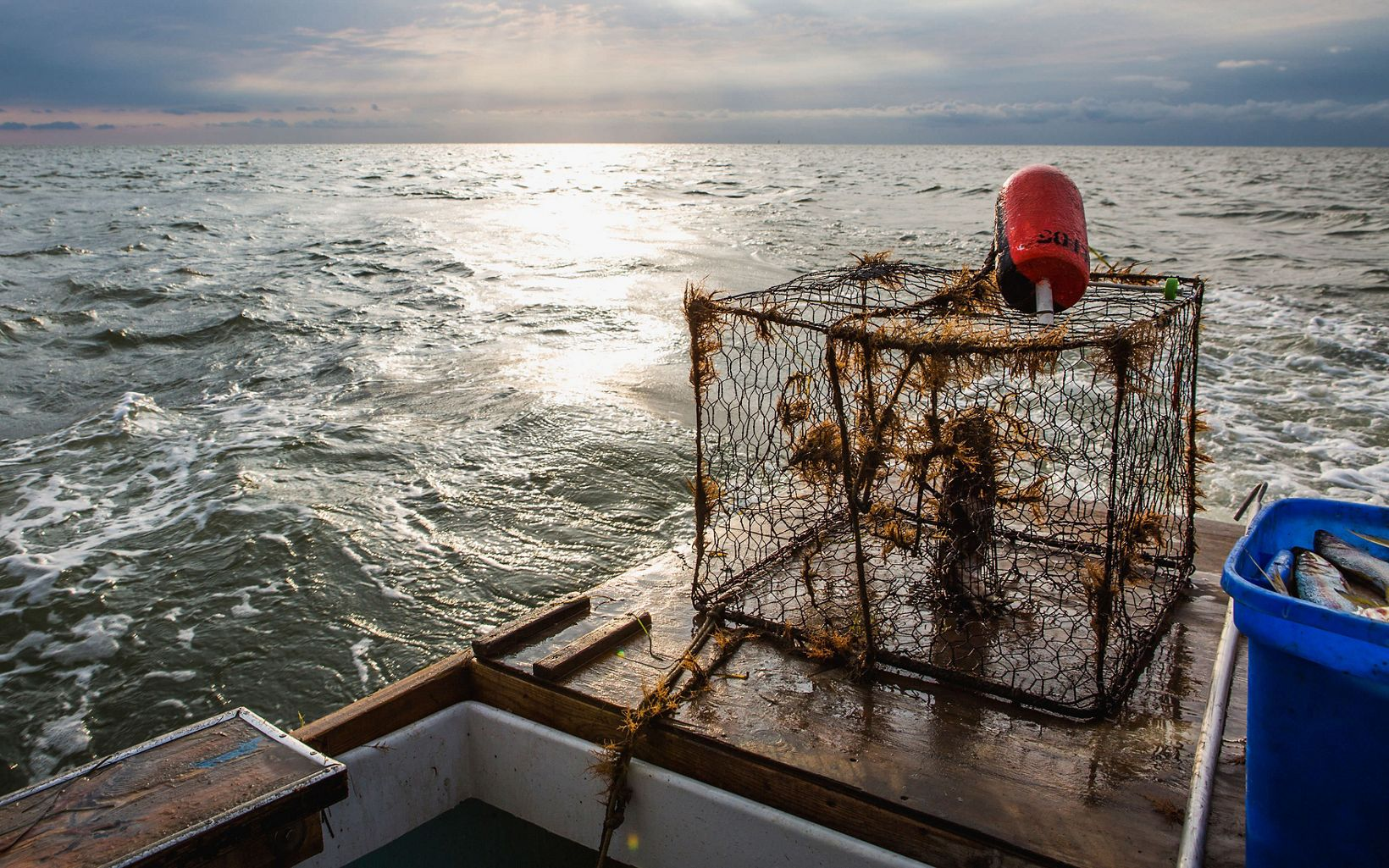 A bucket of fish and a crab cage sit on the back of a boat floating in the Chesapeake Bay.