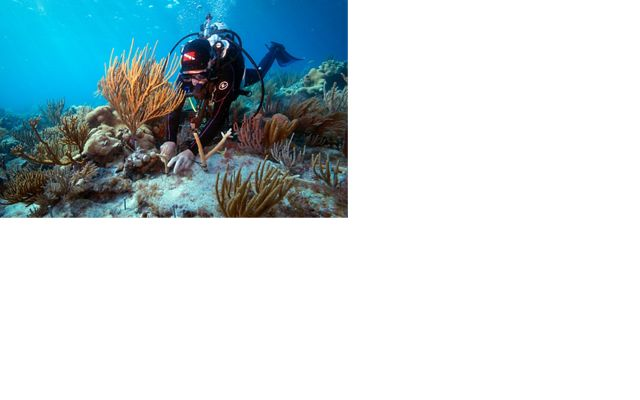 A Nature Conservancy researcher studies coral in Dry To