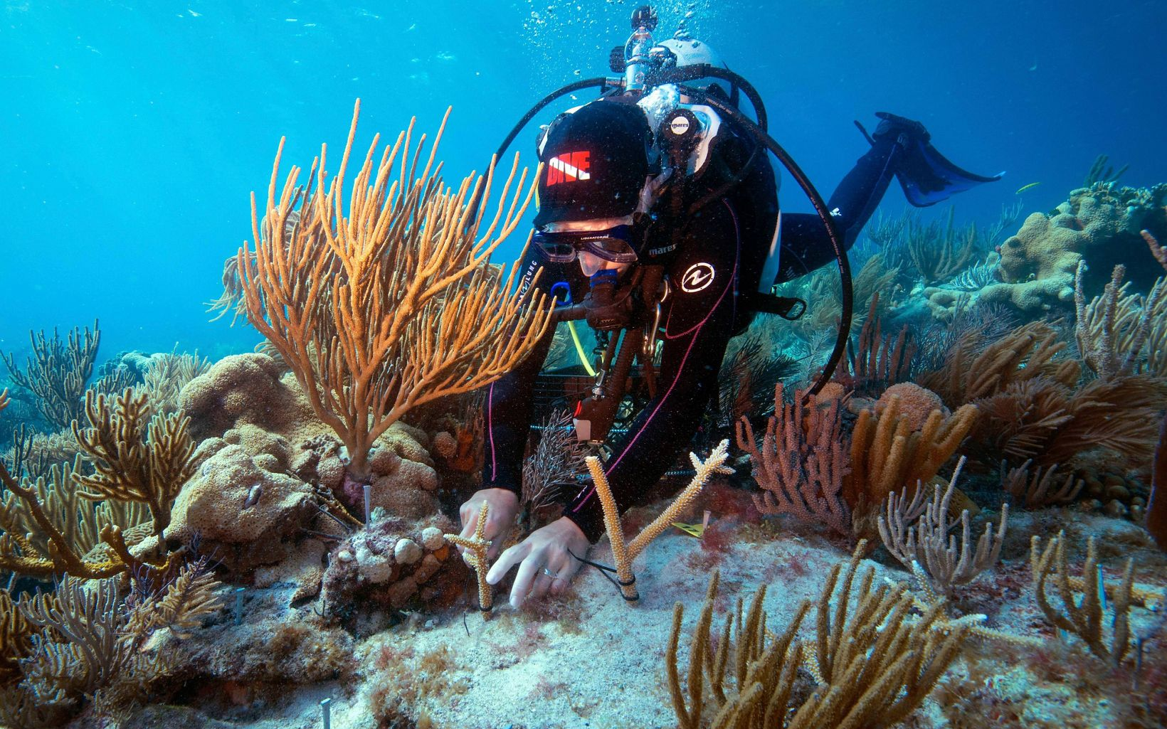 Tortugas National Park Coral Restoration