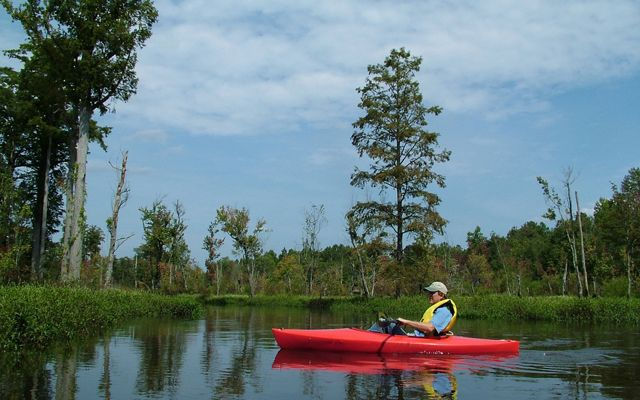 A kayak offers the best way to enjoy the sights and sounds of this watery wilderness.
