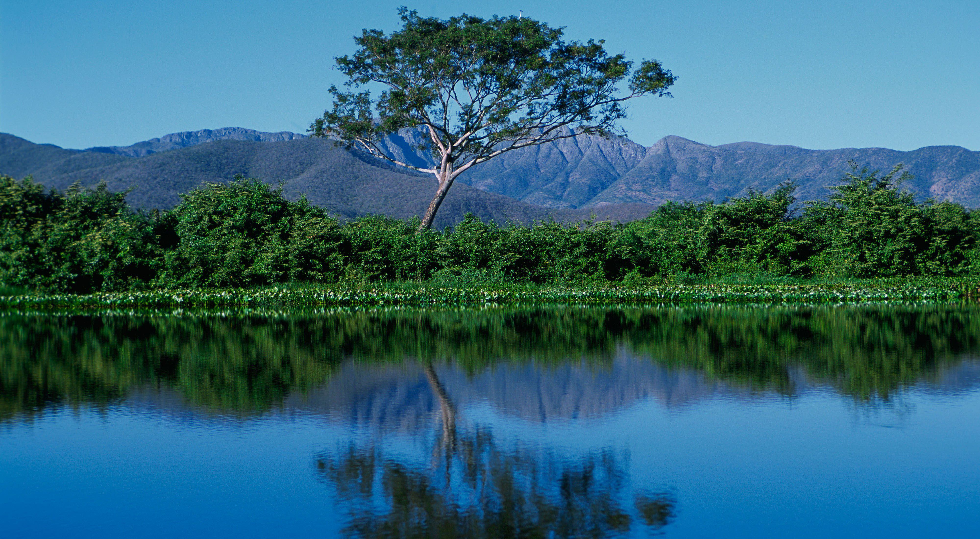 A tree reflected in blue water of the most flooded are