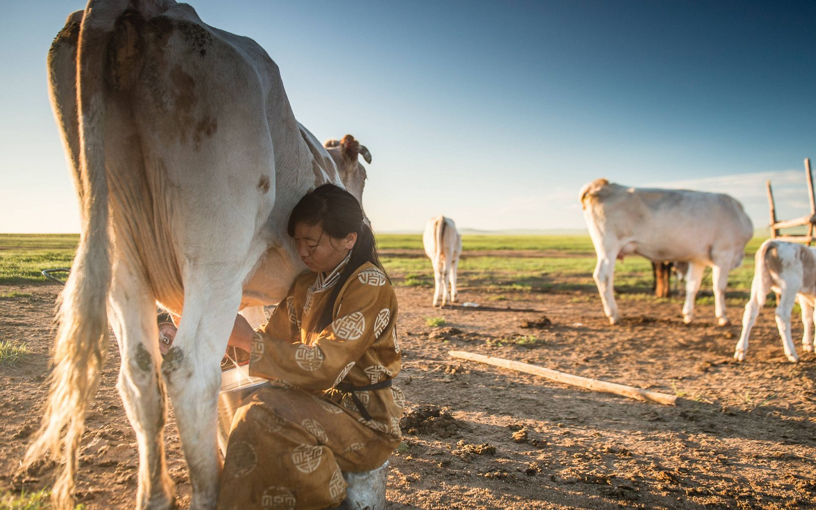 A woman milks a cow in the foreground with a large plain in the background.