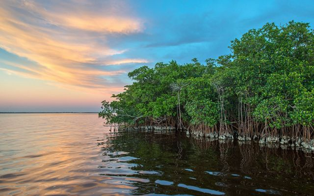 Coastal mangrove forests serve as a breeding gound for sea life and a natural barrier against storms and sea level rise erosion. © Ralph Pace