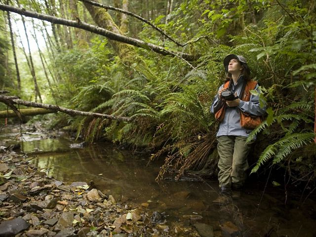 Liane Davis enters observations into an electronic data recorder from a stream that feeds into Ellsworth Creek, a TNC project site at Willapa Bay in Washington.