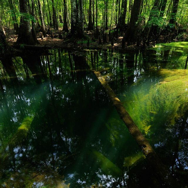 St. Marks River in North Florida