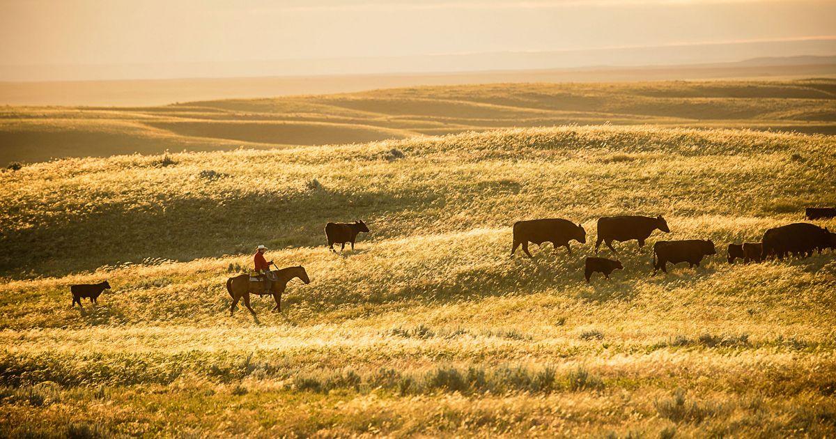 Rider on Matador Ranch