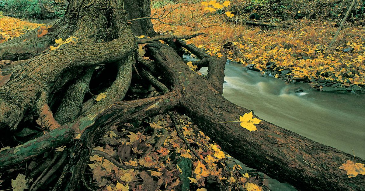 Fall color on Maryland's Bear Creek.