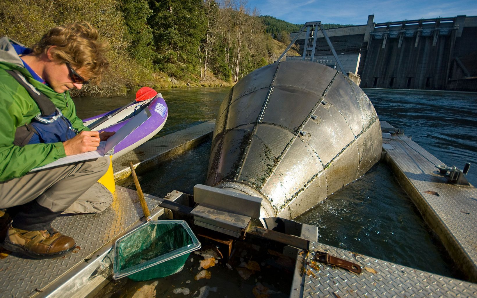Doug Garletts, a fisheries biologist with the U.S. Army Corps of Engineers, inspects a fish trap below Lookout Point Dam located at Willamette River at Lowell, Oregon .