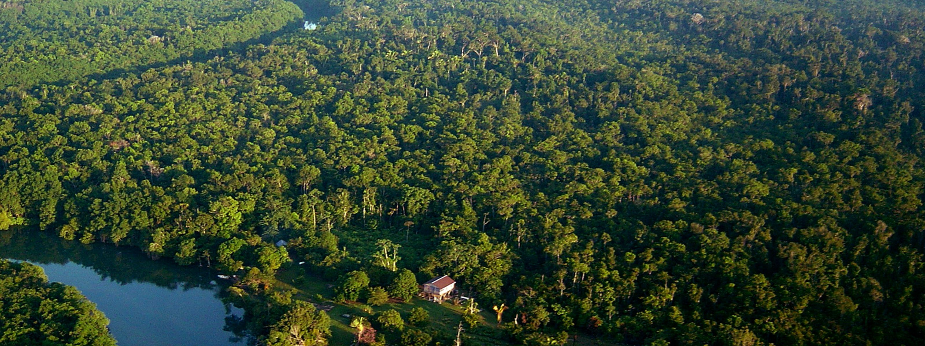 Aerial view of a tropical rainforest