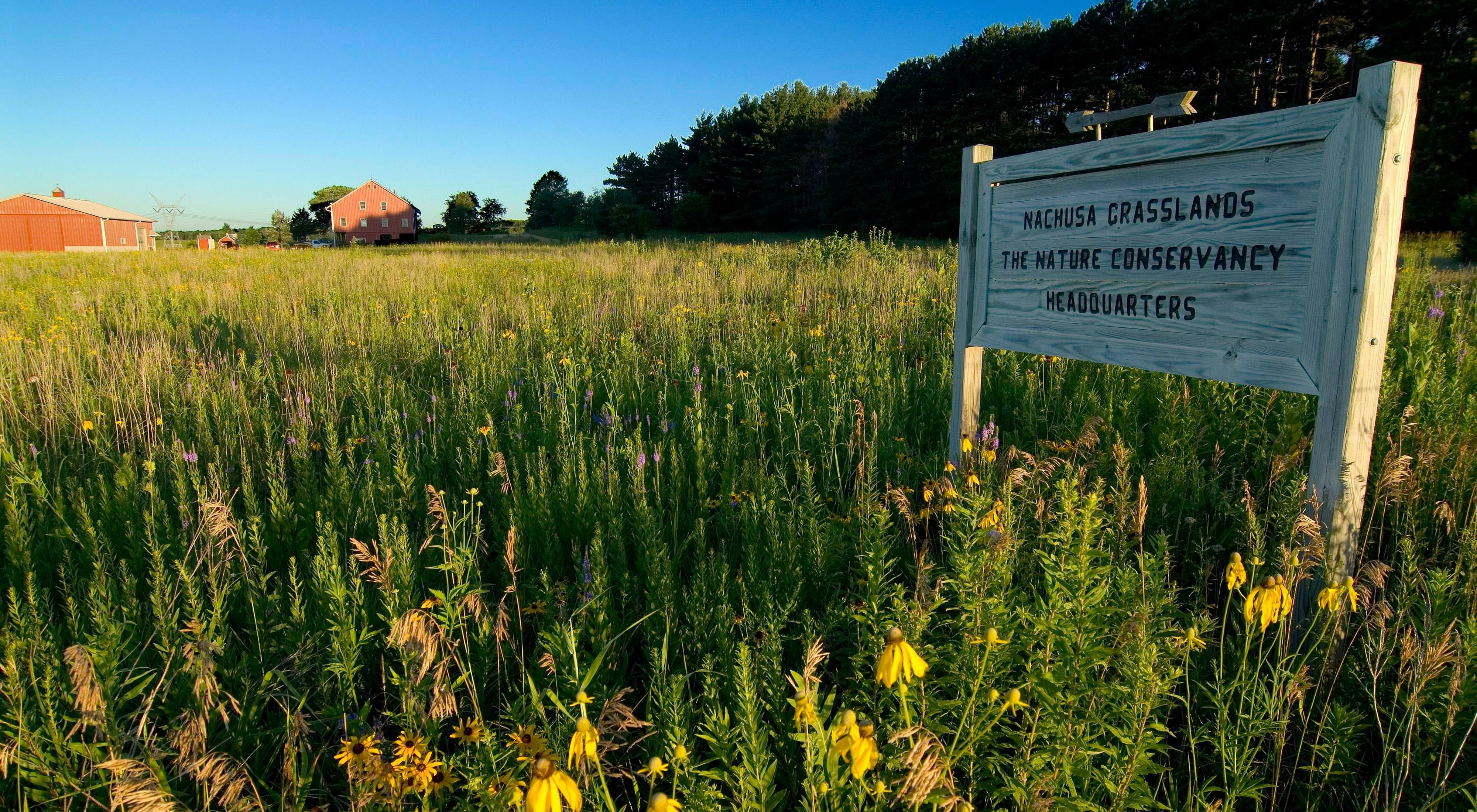 A sign stands in the prairie reading Nachusa Grasslands, The Nature Conservancy Headquarters.