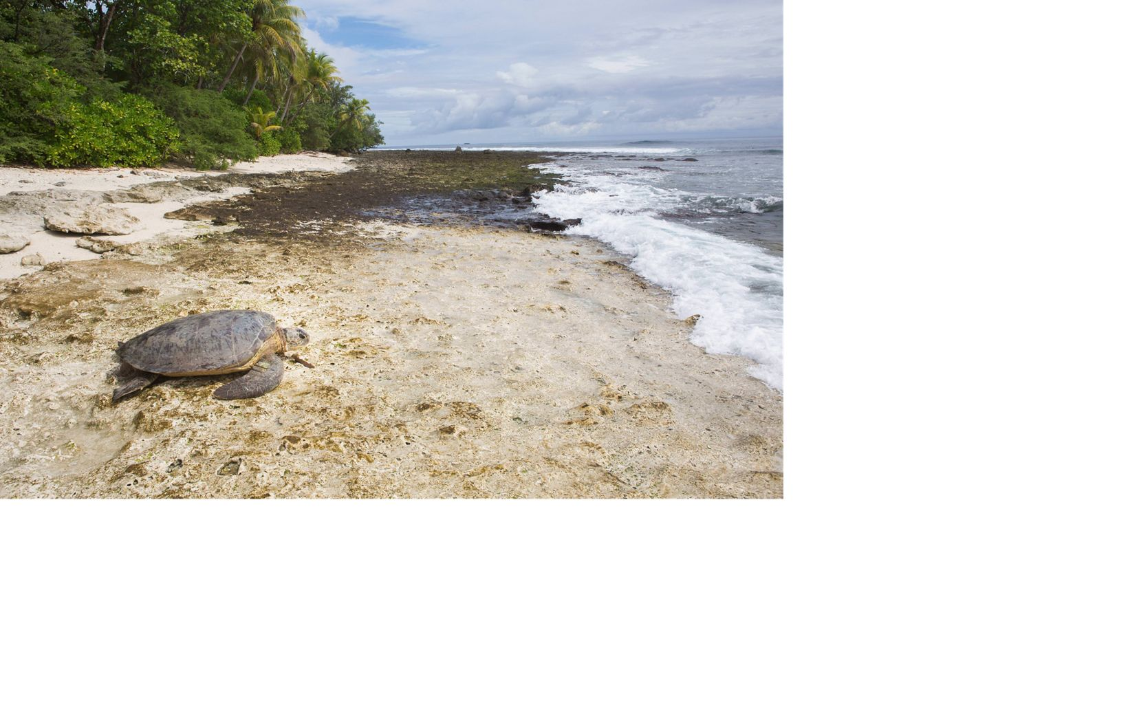 a large turtle on a sandy, seaweed-covered beach