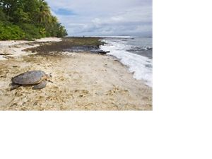 a large turtle on a sandy beach