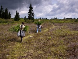 Conservancy staff engaged in planting trees, hike along a trail in high above Canaan Valley in Dolly Sods.