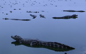 Lagoon with alligators in Brazil