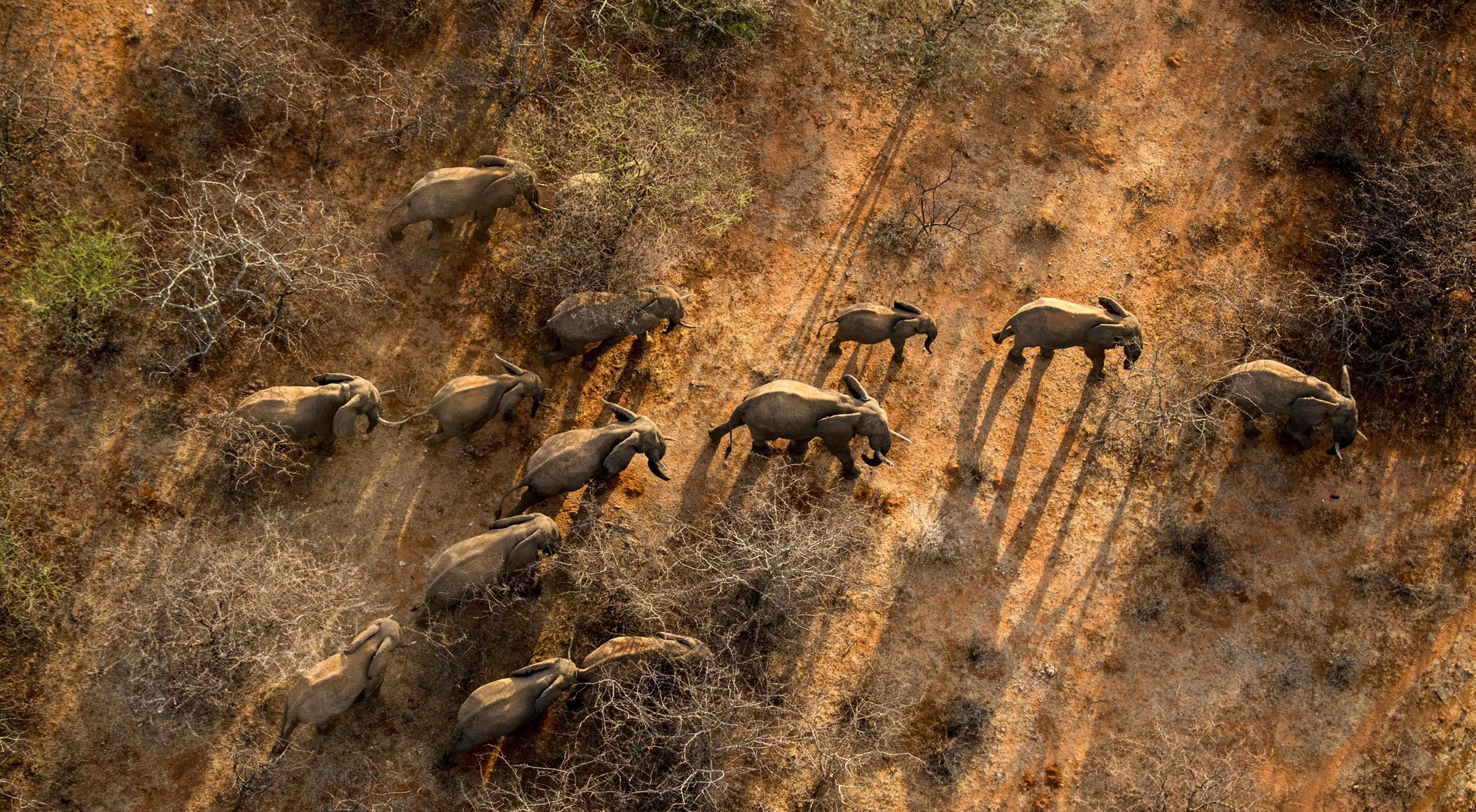 Elephants in the Namunyak Wildlife Conservancy in northern Kenya's Matthews Range.