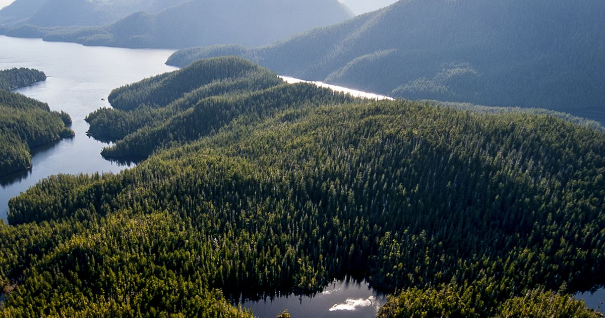 Clayoquot Sound, on the west coast of Vancouver Island, British Columbia.