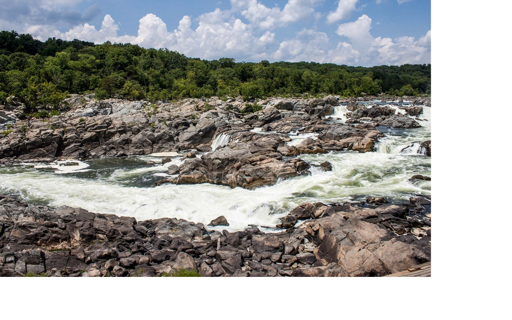 The Potomac Gorge has one of the nation's highest concentrations of globally rare natural communities.